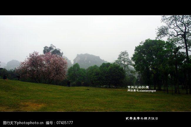 风景生活旅游餐饮紫荆花图